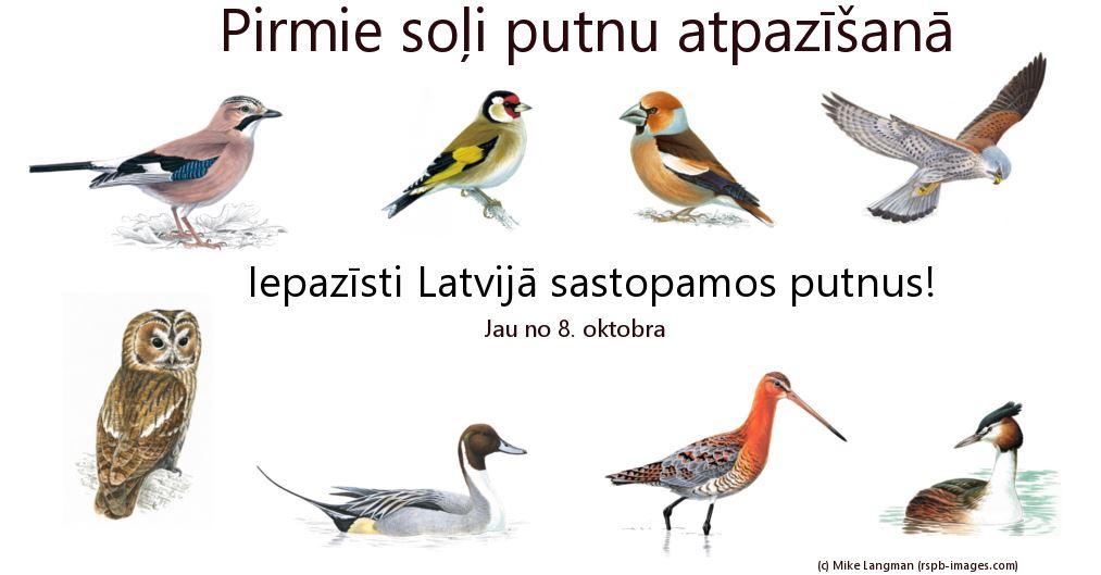 Pirmie soļi putnu atpazīšanā. Putnu kursi